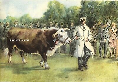 Vintage Print HEREFORD PRIZE WINNING BULL CATTLE 1948 ILLUS.BY LIONEL EDWARDS