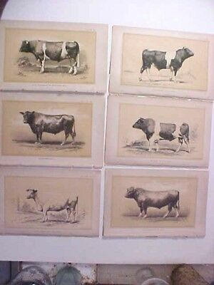 lot of Six 1888 Prize Bull & Cow lithographs by Julius Bien & Co. - Book Plates