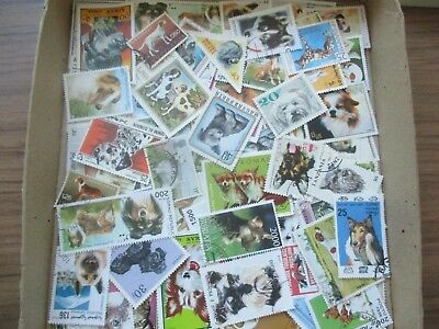 ESTATE: Dog accumulation in box  - great mix of issues (72394)
