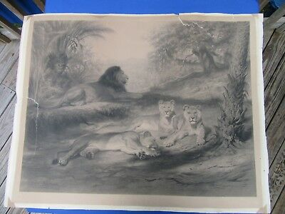 """Large Antique Rosa Bonheur Engraving """"On Guard"""" Painting Lions Art French"""
