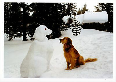 Dog Lovers Golden Retriever & Snowman/snowdog Christmas Holiday Cards 4