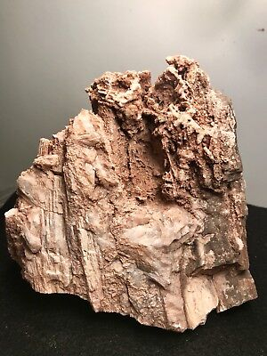 Arizona Petrified Wood With Loaded With Rare Calcite. 9 Lbs