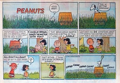 Peanuts by Charles Schulz - large half-page color Sunday comic - July 1, 1962