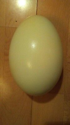 1 LARGE Rhea eggshell. Blown out and empty, both ends