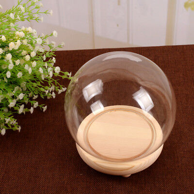 Round Decorative Glass Dome with Wooden Base Cloche Bell Jar LED Light Display
