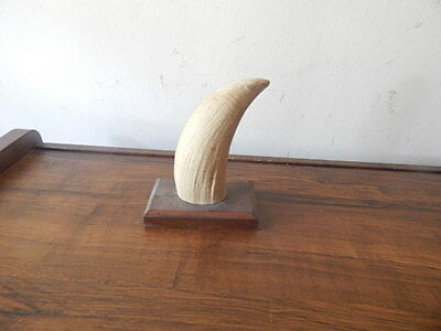 """4 3/4"""" Tall Maritime Resin Reproduction Faux Whale Tooth On Wood Stand Intl Sale"""