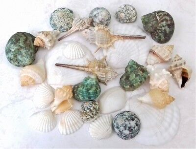 50pcs Natural Sea Shells Craft Décor Bathroom Sea Shells Mixed