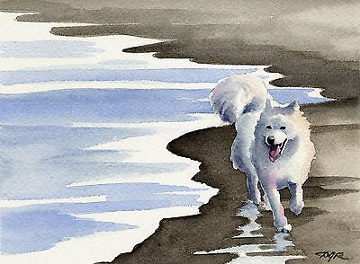 SAMOYED AT THE BEACH Watercolor 8 x 10  ART Print Signed by Artist DJR