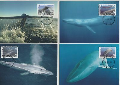 XB18008 British Antarctic Territory 2003 whales sealife WWF maxicards used