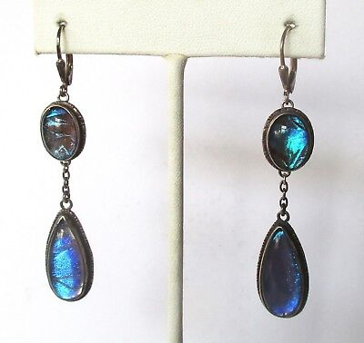Pair of Antique Sterling Silver & Morpho Butterfly Wing Earrings