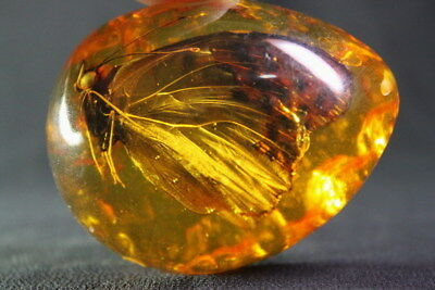 Chinese Exquisite Decoration Lifelike Amber Inlay Butterfly Elegant Pendant