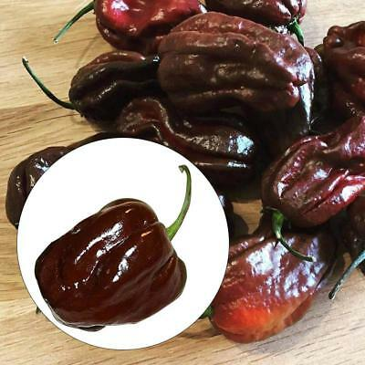 200 Seeds/Pack Chocolate Pepper Seeds Naga Jolokia Chilli Seeds Ghost Peppe G2F6