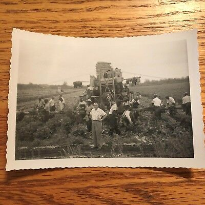 African American Photo MEN WORKING IN THE FIELD - HARVEST photo Black Americana!