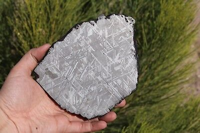 Muonionalusta meteorite etched full slice 607.2 grams!