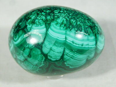 A Super Beautiful Pattern on This AAA MALACHITE Egg or Oval The Congo! 139gr e