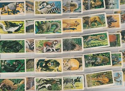 Cigarette / Tea Cards Canada Brooke Bond Africa Animals From Collection
