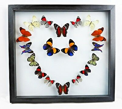 """18 real butterfly taxidermy collection in 10.5"""" x 11.5"""" frame, decoration, heart"""
