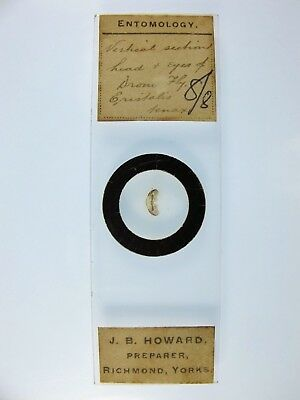 Antique Microscope Slide by J.B.Howard. V.S.Head & Eyes of Drone Fly.