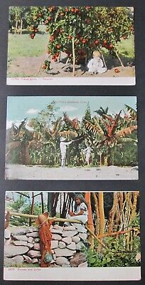Early CUBA 3 Postcards Agriculture All Unwritten