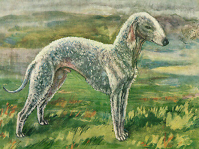 Dog Print 1934 Bedlington Terrier Dog by Vere Temple VINTAGE