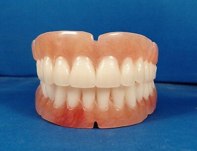 Dentures, set of false teeth with Hollywood bleach shade teeth.