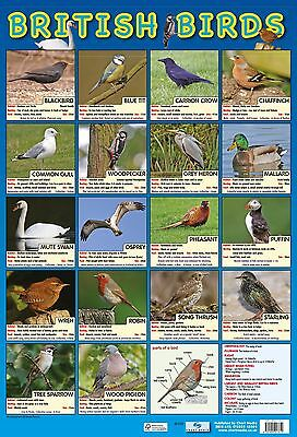 British Birds Poster/ Educational / Common Garden Birds - A2 size