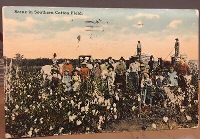Antique Postcard SCENE IN SOUTHERN COTTON FIELD Post Card Postmarked 1911