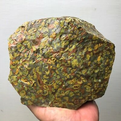 New!!! Top Quality Large Imperial Leopard Jasper Rough  - 12 Lb - From - India
