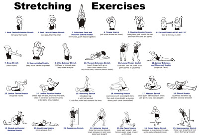 Gym Stretching Exercises Poster | A4 A3 & A3+ Sizes | LAMINATED |Workout Fitness