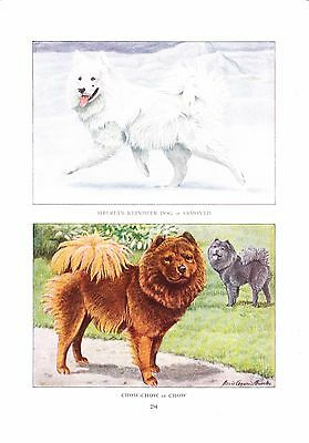 1919 Vintage Dog Print Siberian Reindeer & Chow Chow Painting  a/s Louis Fuertes