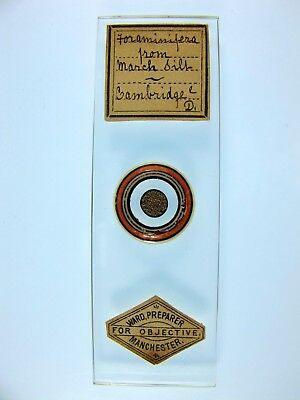 Antique Microscope Slide by Edward Ward. Foraminifera from March Silt. Cambridge