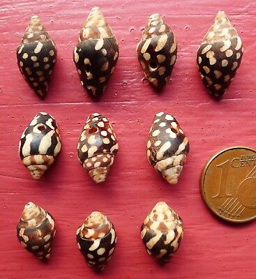 10 Perles Coquillage Ancien Maroc Afrique Antique Moroccan Shell Bead X10 Africa