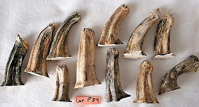 "11 Dried Pumpkin Stem 2-1/4"" - 3-1/2"" Heat Treated, Clean Ready to Use Lot P 34"
