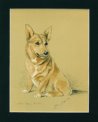 VINTAGE Dog Print 1940 Pembroke Welsh Corgi Dog by Lucy Dawson