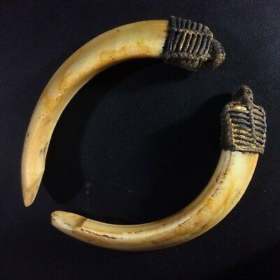 Thai Amulet Real 2 Wild BOAR Teeth Pig Pendant Powerful Fang Tooth Charm Blessed