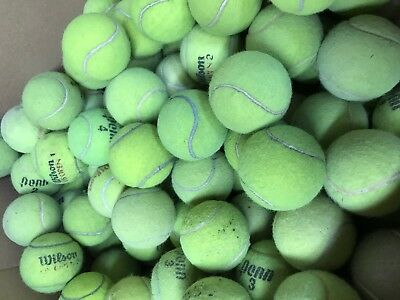 120 Quality Used Tennis Balls - Free Ground Shipping - Dog Toys