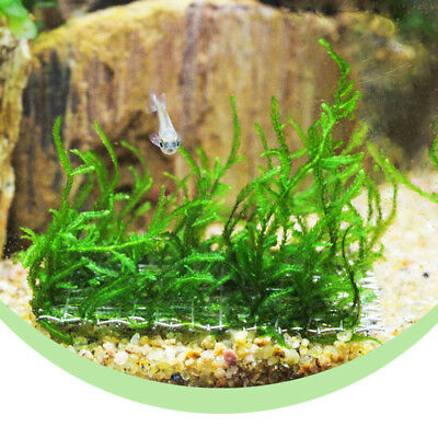 Moss on Mesh - Live Aquatic Aquarium Plants 10 Pcs Aquatic Moss Mesh