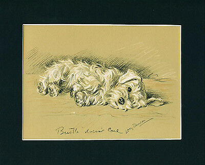 Dog Print 1940 Sealyham Terrier Dog resting by Lucy Dawson VINTAGE