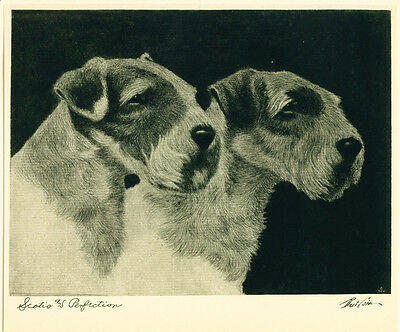 Dog Print 1931 Sealyham Terrier by Bert Cobb VINTAGE