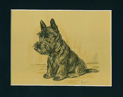 Dog Print 1940 Scottish Terrier by Lucy Dawson VINTAGE