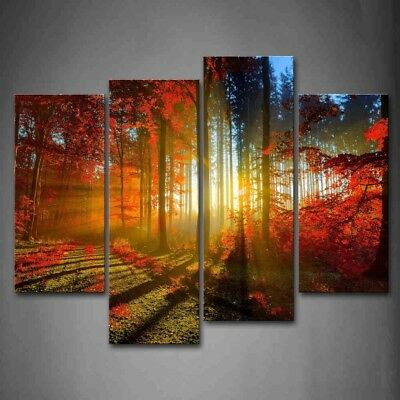 Framed Forest Sunshines Scenery Wall Art Canvas Print Artwork Landscape Pictures
