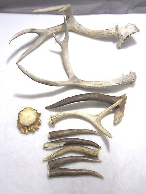 Antler Horn Lot for Crafting or Display
