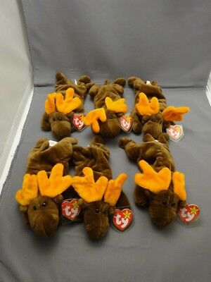 Ty Original Beanie Babies CHOCOLATE the moose (ALL 6)