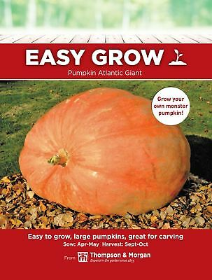 Thompson & Morgan - Vegetable - Pumpkin Atlantic Giant  - 10 Seeds