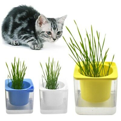 Cat Grass Growing Kit-Divided Containers+2 Pack Organic Seed Pet Cat Health Food