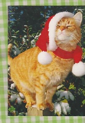 ORANGE TABBY CAT in Santa Hat & Red Scarf Christmas Card