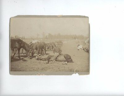 Spanish American War Troop C Soldier Photo- 3rd cavalry Chicka-Manga