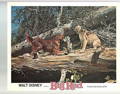 Big Red-Gilles Payant- Walter Pidgeon-11x14-Color-Lobby Card