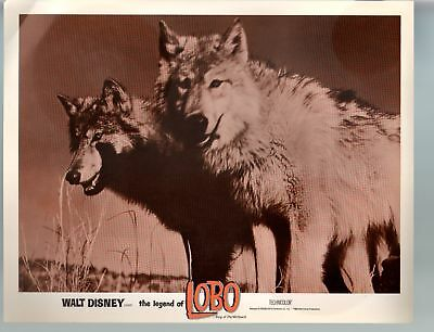 Legend Of Lobo...King Of The Wolfpack-11x14-Color-Lobby Card-Nature-Disney