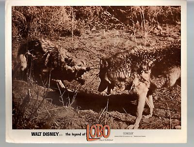Legend Of Lobo...King Of The Wolfpack-Ingvald Lieberkind-11x14-Color-Lobby Card